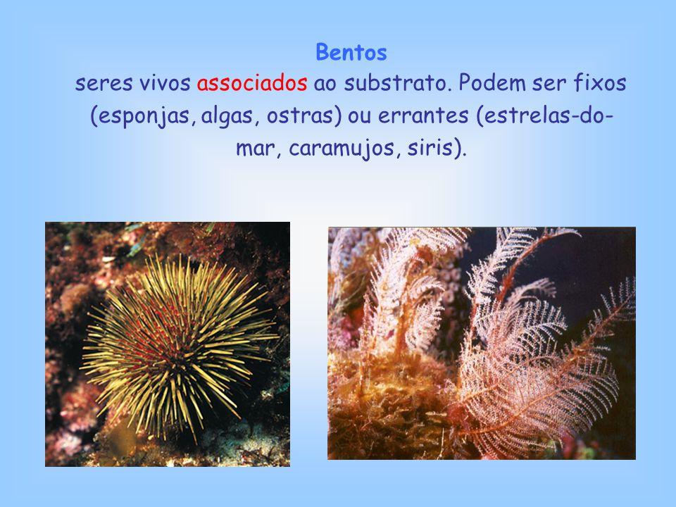 Bentos seres vivos associados ao substrato. Podem ser fixos (esponjas, algas, ostras) ou errantes (estrelas-do- mar, caramujos, siris).