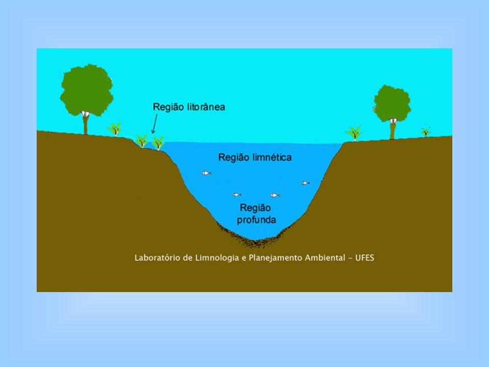 Lagos eutróficos (ricos em nutrientes): Regiões temperadas.