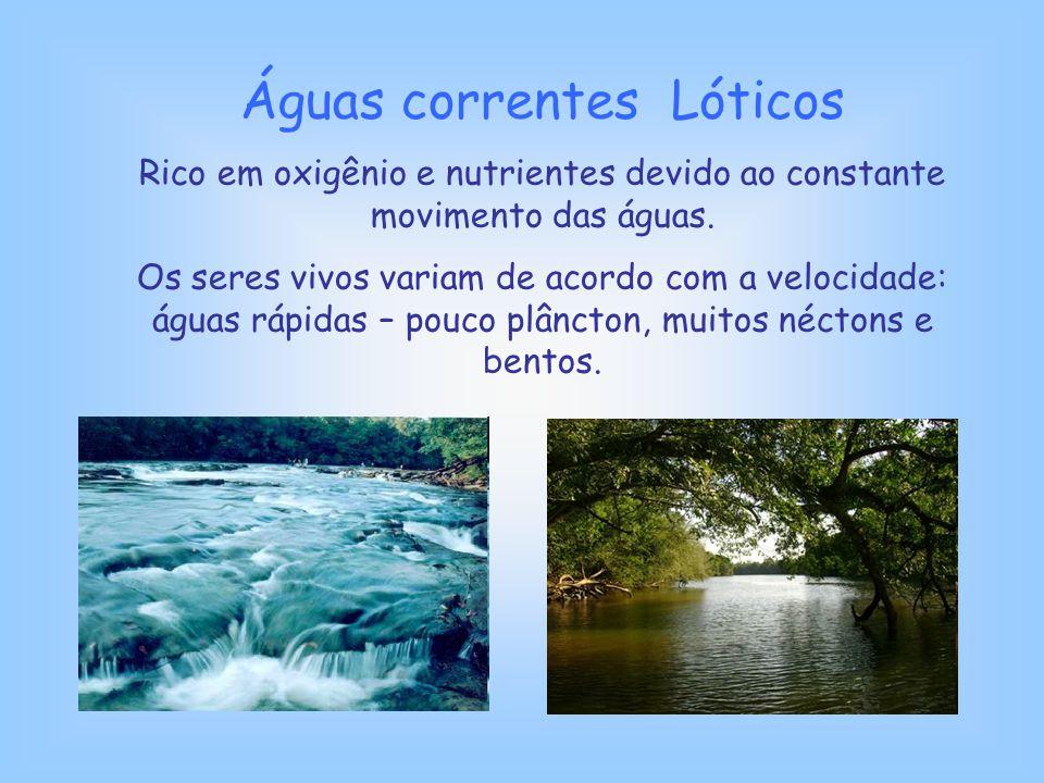 Águas correntes Lóticos Rico em oxigênio e nutrientes devido ao constante movimento das águas. Os seres vivos variam de acordo com a velocidade: águas