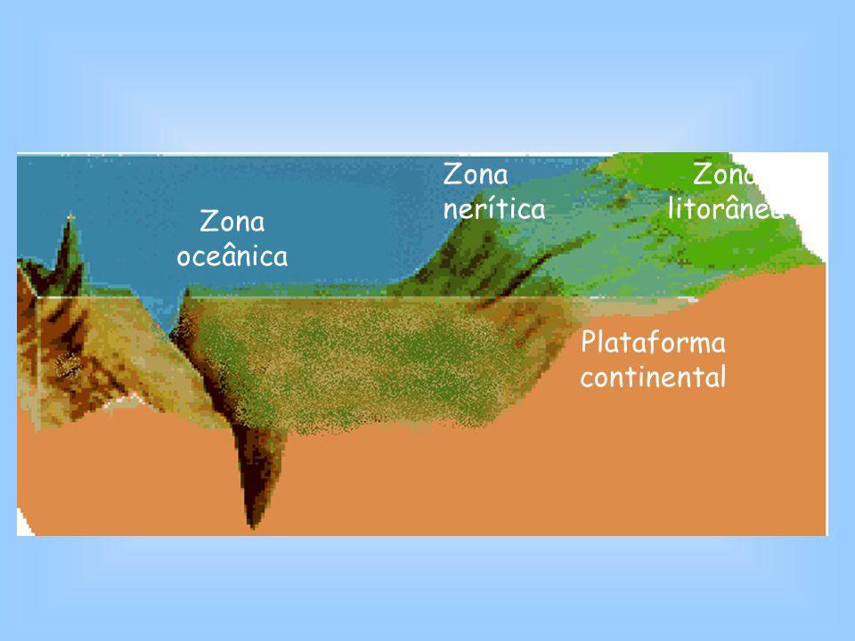 Zona oceânica Plataforma continental Zona litorânea Zona nerítica