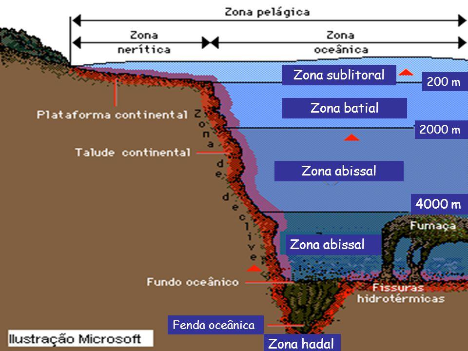 Zona sublitoral 200 m Zona batial 2000 m Zona abissal Zona hadal Fenda oceânica 4000 m