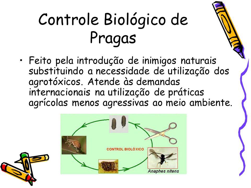 Pesticidas e Herbicidas Origem: Atividade agrícola. Efeito: Acúmulo nas cadeias alimentares chamado magnificação trófica, efeito acumulativo ou biocum