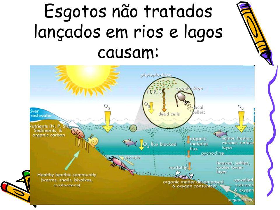 Esgotos não tratados lançados em rios e lagos causam: 3 – Morte de peixes. 4 – Prolifera ç ão de organismos anaer ó bios. 5 – Morte de todo rio ou lag