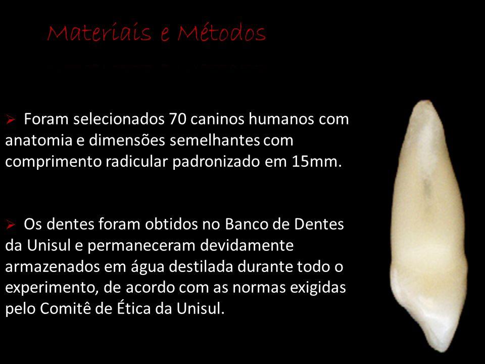  Foram selecionados 70 caninos humanos com anatomia e dimensões semelhantes com comprimento radicular padronizado em 15mm.  Os dentes foram obtidos