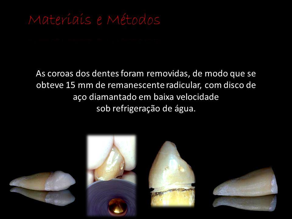 As coroas dos dentes foram removidas, de modo que se obteve 15 mm de remanescente radicular, com disco de aço diamantado em baixa velocidade sob refri