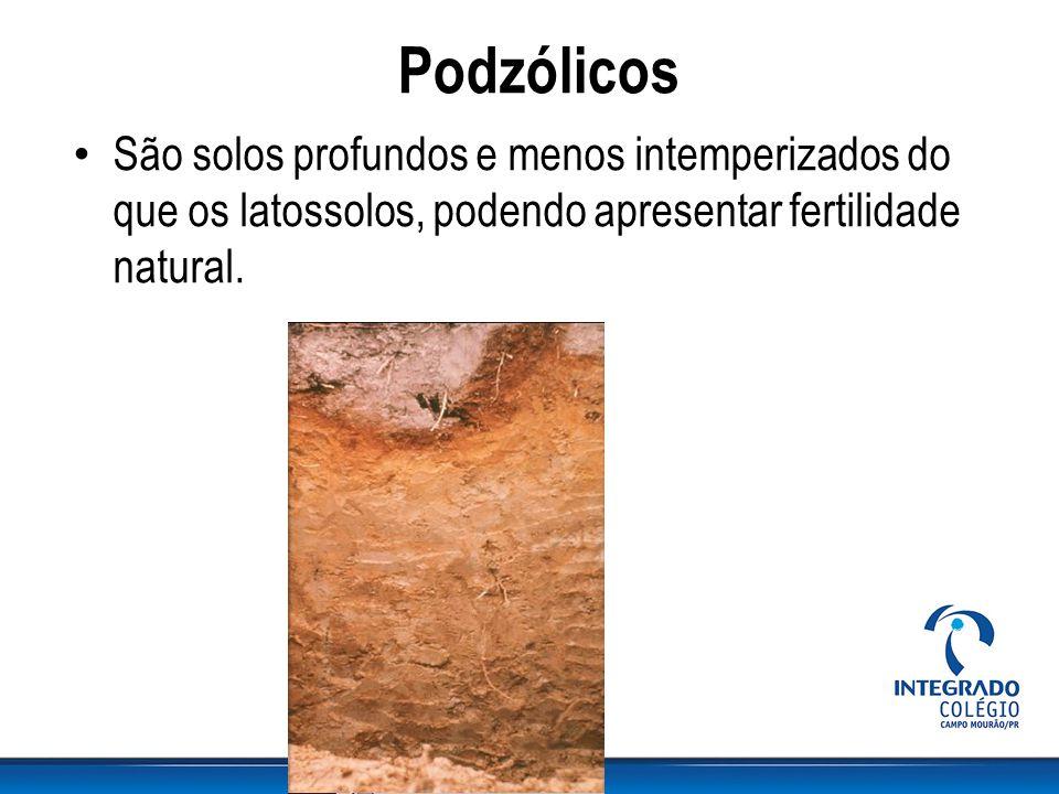 Podzólicos São solos profundos e menos intemperizados do que os latossolos, podendo apresentar fertilidade natural.
