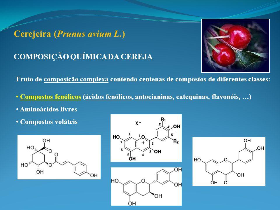 Fruto de composição complexa contendo centenas de compostos de diferentes classes: Compostos fenólicos (ácidos fenólicos, antocianinas, catequinas, flavonóis, …) Aminoácidos livres Compostos voláteis COMPOSIÇÃO QUÍMICA DA CEREJA Cerejeira (Prunus avium L.)
