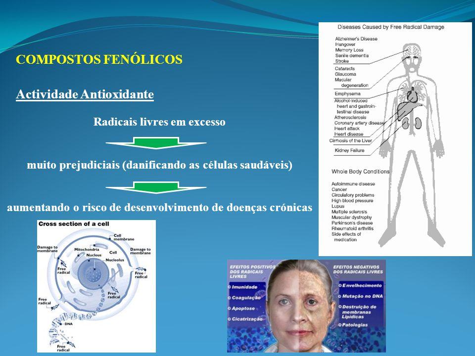 Radicais livres em excesso muito prejudiciais (danificando as células saudáveis) aumentando o risco de desenvolvimento de doenças crónicas COMPOSTOS FENÓLICOS Actividade Antioxidante