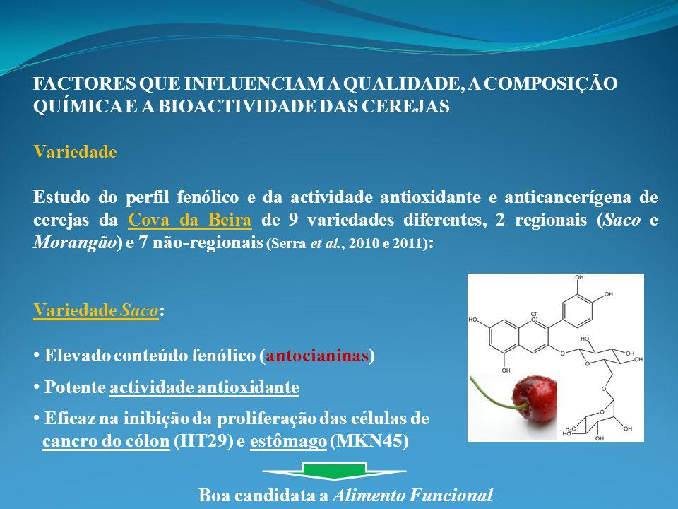 FACTORES QUE INFLUENCIAM A QUALIDADE, A COMPOSIÇÃO QUÍMICA E A BIOACTIVIDADE DAS CEREJAS Variedade Estudo do perfil fenólico e da actividade antioxidante e anticancerígena de cerejas da Cova da Beira de 9 variedades diferentes, 2 regionais (Saco e Morangão) e 7 não-regionais (Serra et al., 2010 e 2011) : Variedade Saco: Elevado conteúdo fenólico (antocianinas) Potente actividade antioxidante Eficaz na inibição da proliferação das células de cancro do cólon (HT29) e estômago (MKN45) Boa candidata a Alimento Funcional