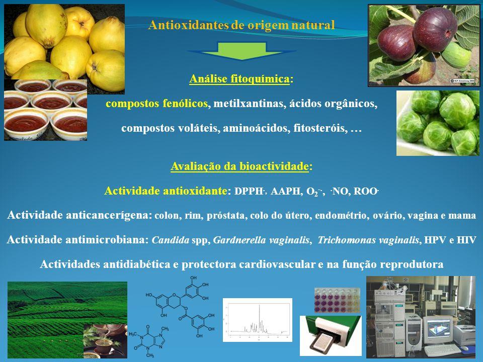 Antioxidantes de origem natural Análise fitoquímica: compostos fenólicos, metilxantinas, ácidos orgânicos, compostos voláteis, aminoácidos, fitosteróis, … Avaliação da bioactividade: Actividade antioxidante: DPPH ·, AAPH, O 2 - ·, · NO, ROO · Actividade anticancerígena: colon, rim, próstata, colo do útero, endométrio, ovário, vagina e mama Actividade antimicrobiana: Candida spp, Gardnerella vaginalis, Trichomonas vaginalis, HPV e HIV Actividades antidiabética e protectora cardiovascular e na função reprodutora