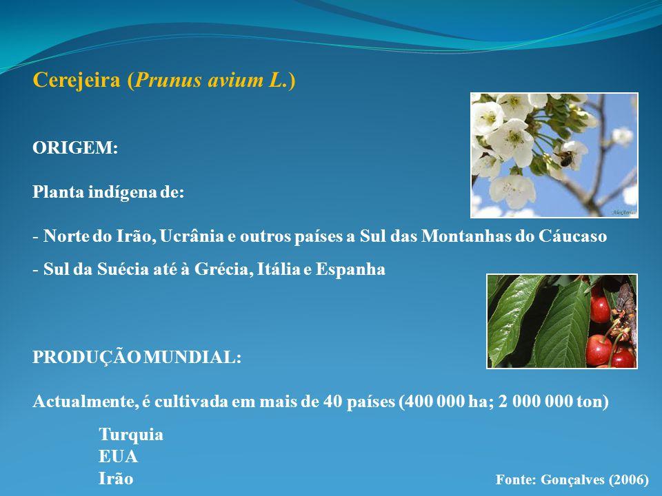 Cerejeira (Prunus avium L.) ORIGEM: Planta indígena de: - Norte do Irão, Ucrânia e outros países a Sul das Montanhas do Cáucaso - Sul da Suécia até à Grécia, Itália e Espanha PRODUÇÃO MUNDIAL: Actualmente, é cultivada em mais de 40 países (400 000 ha; 2 000 000 ton) Turquia EUA Irão Fonte: Gonçalves (2006)