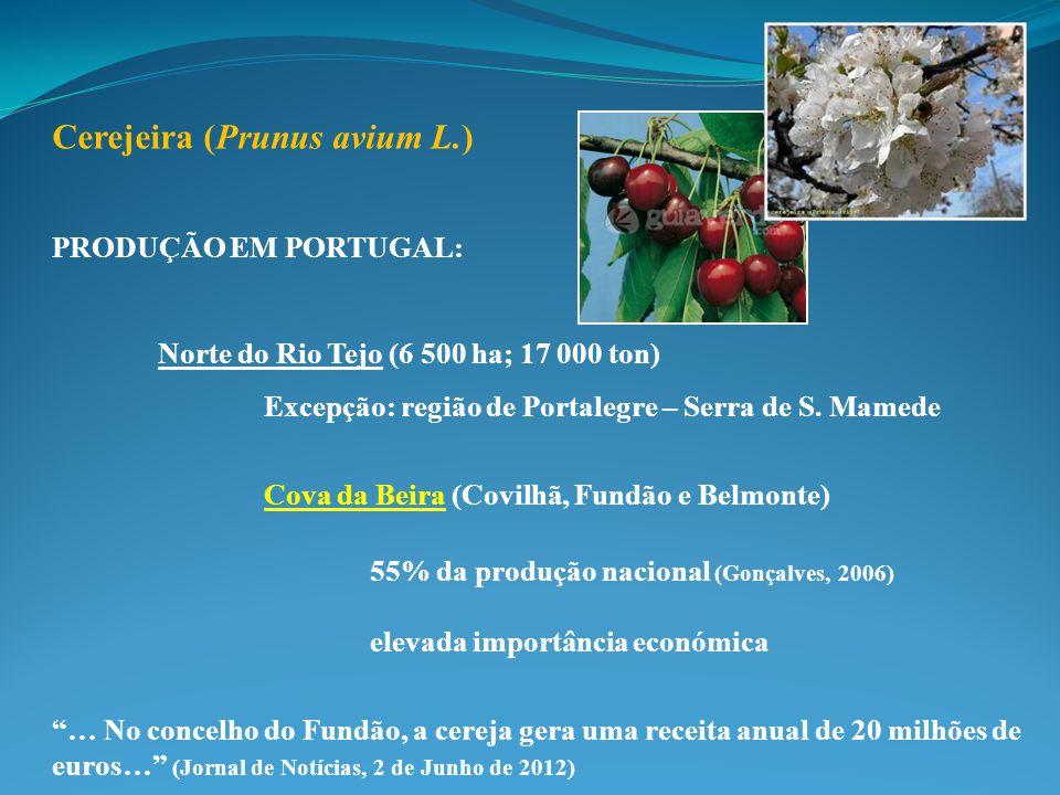 Cerejeira (Prunus avium L.) PRODUÇÃO EM PORTUGAL: Norte do Rio Tejo (6 500 ha; 17 000 ton) Excepção: região de Portalegre – Serra de S. Mamede Cova da