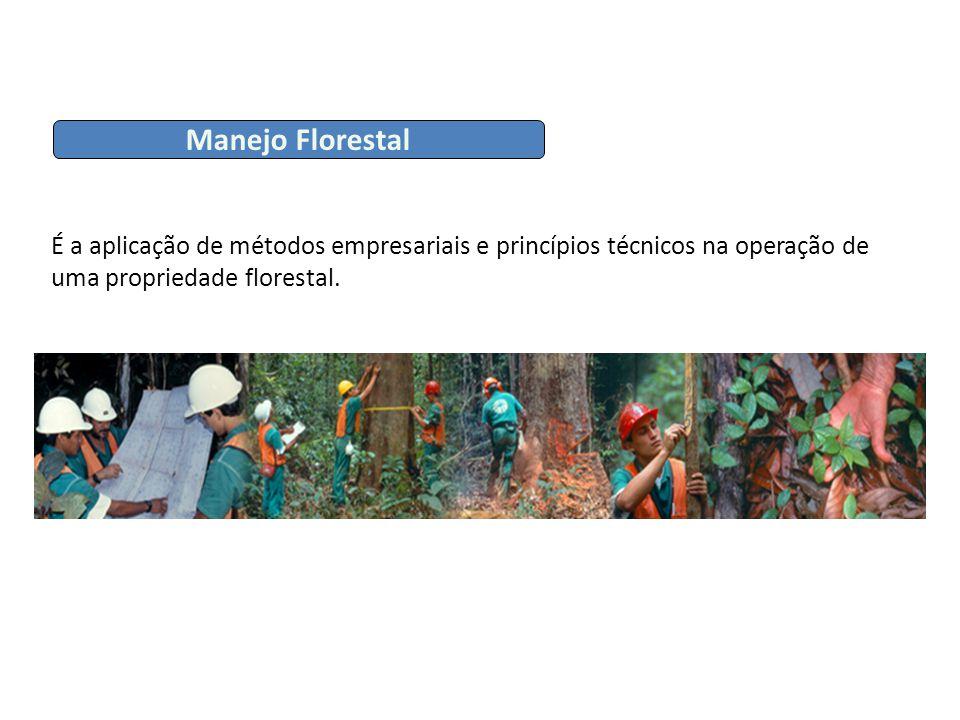 É a aplicação de métodos empresariais e princípios técnicos na operação de uma propriedade florestal. Manejo Florestal