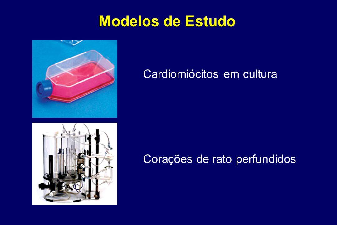 Modelos de Estudo Cardiomiócitos em cultura Corações de rato perfundidos