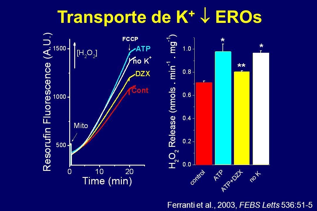 Ferranti et al., 2003, FEBS Letts 536:51-5 Transporte de K +  EROs