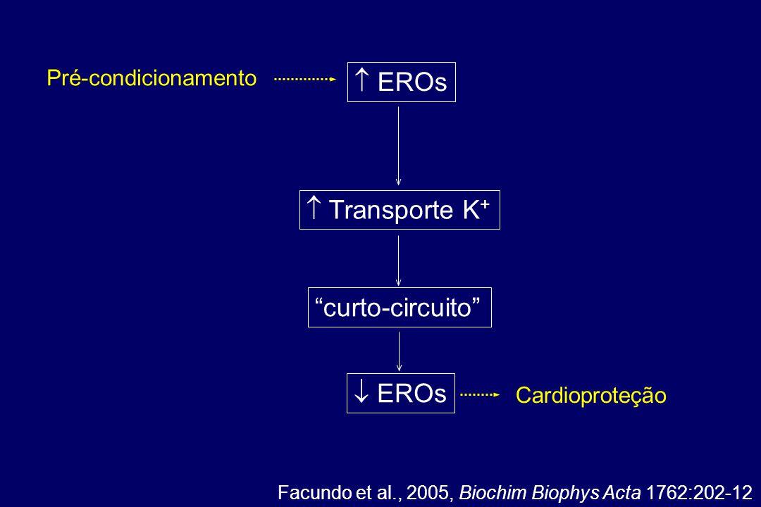 Facundo et al., 2005, Biochim Biophys Acta 1762:202-12  EROs curto-circuito  EROs  Transporte K + Pré-condicionamento Cardioproteção