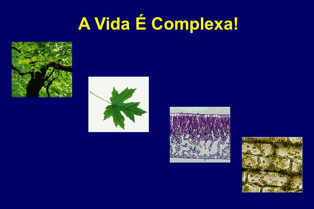 Caldeira da Silva et al., 2008 DNP Aumenta Longevidade de Camundongos