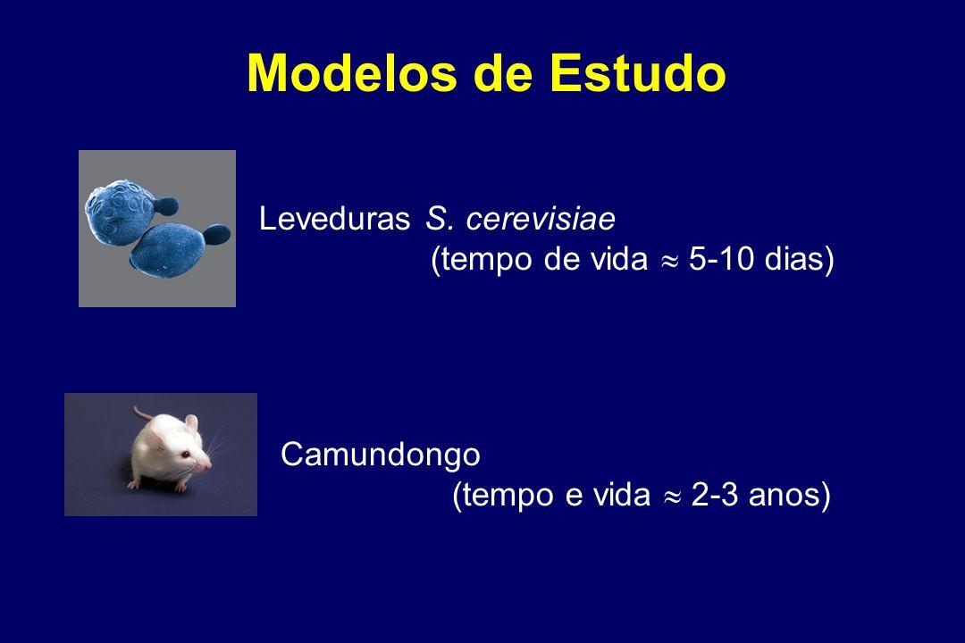 Modelos de Estudo Leveduras S.