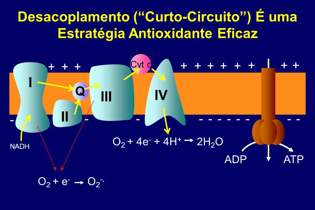 Cyt c I II IV NADH III +++ +++++ +++ ADP ATP Q ---------- - O 2 + e - O 2 -.