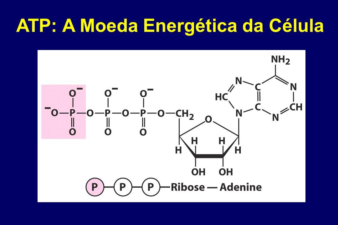 ATP: A Moeda Energética da Célula