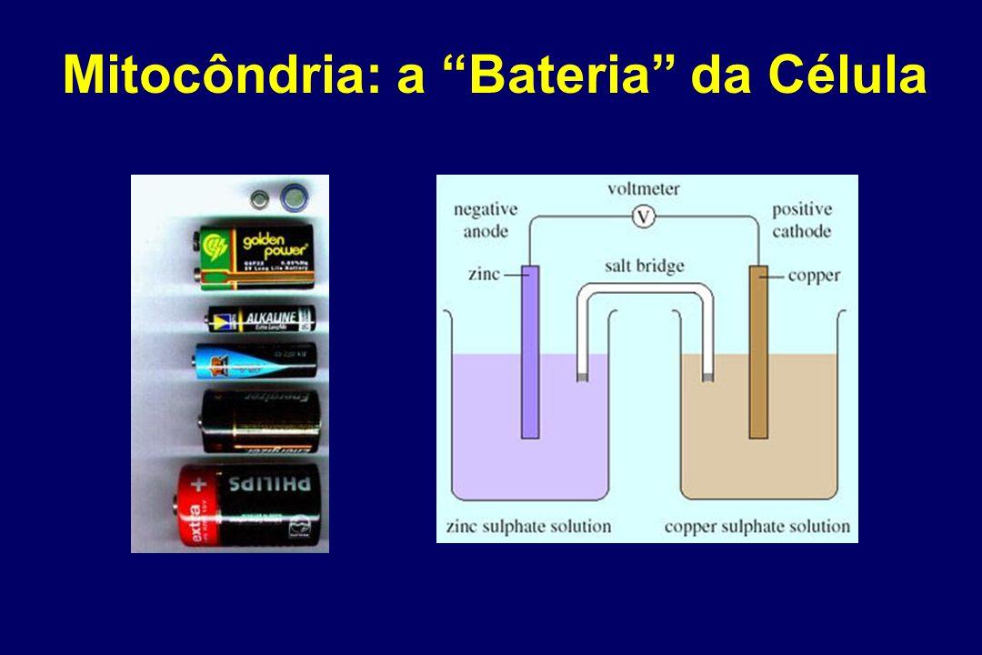 Mitocôndria: a Bateria da Célula