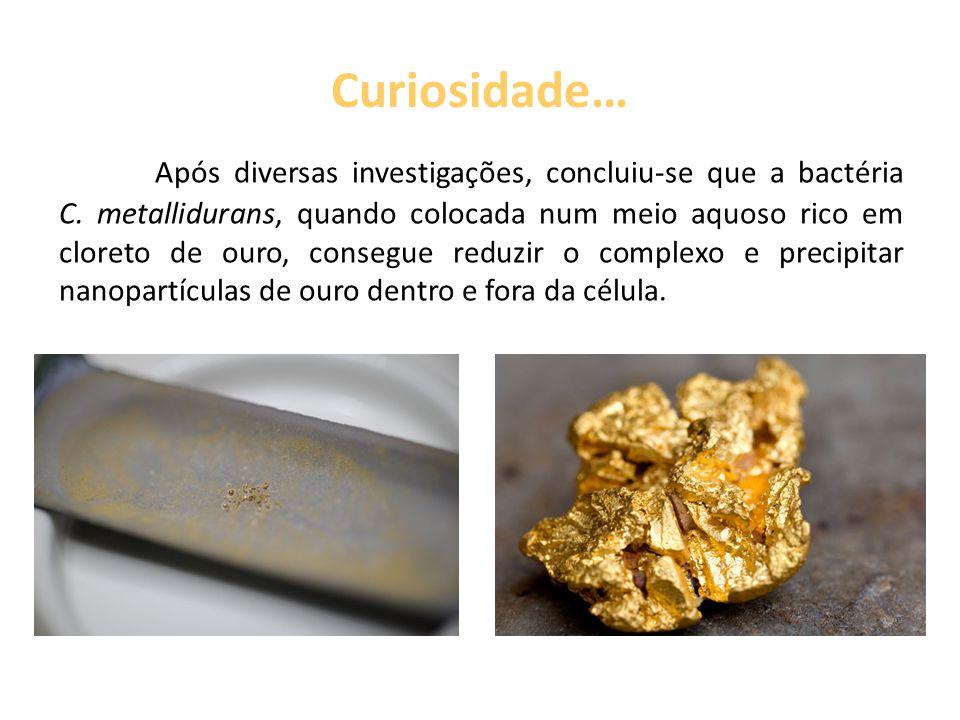 Curiosidade… Após diversas investigações, concluiu-se que a bactéria C. metallidurans, quando colocada num meio aquoso rico em cloreto de ouro, conseg