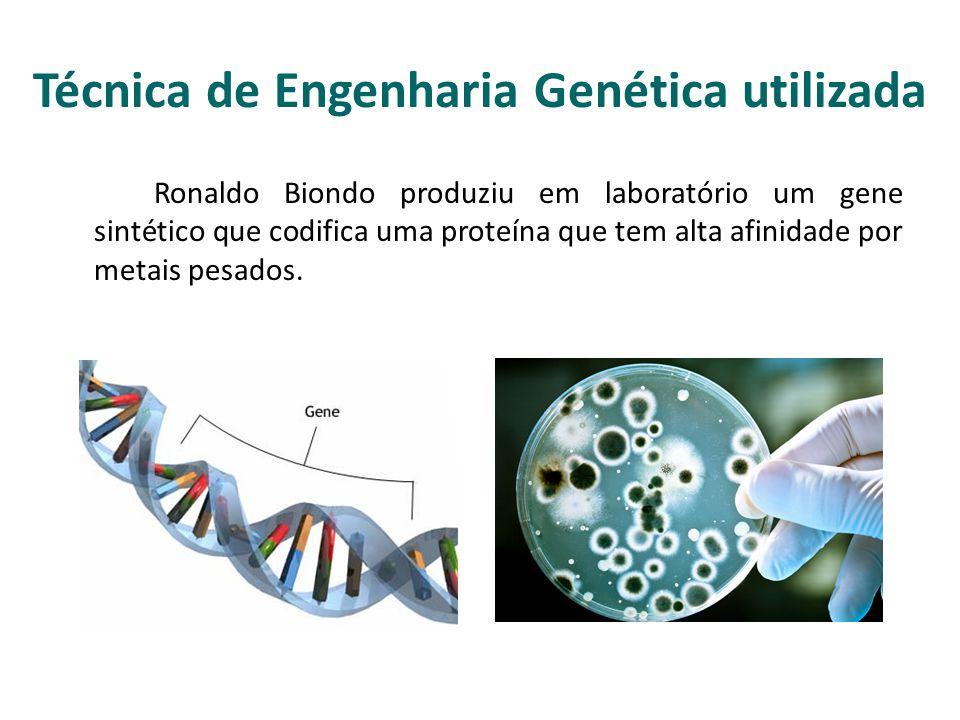 Técnica de Engenharia Genética utilizada Ronaldo Biondo produziu em laboratório um gene sintético que codifica uma proteína que tem alta afinidade por