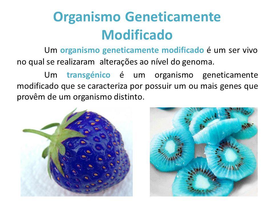 Organismo Geneticamente Modificado Um organismo geneticamente modificado é um ser vivo no qual se realizaram alterações ao nível do genoma. Um transgé