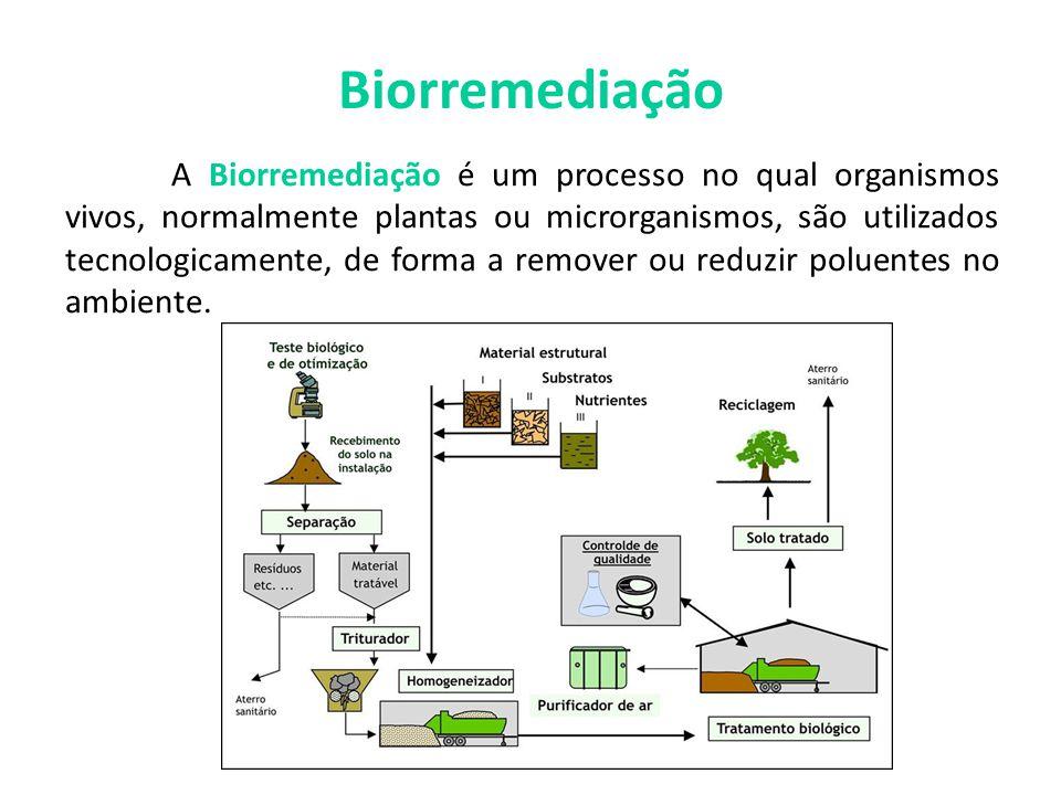 Biorremediação A Biorremediação é um processo no qual organismos vivos, normalmente plantas ou microrganismos, são utilizados tecnologicamente, de for