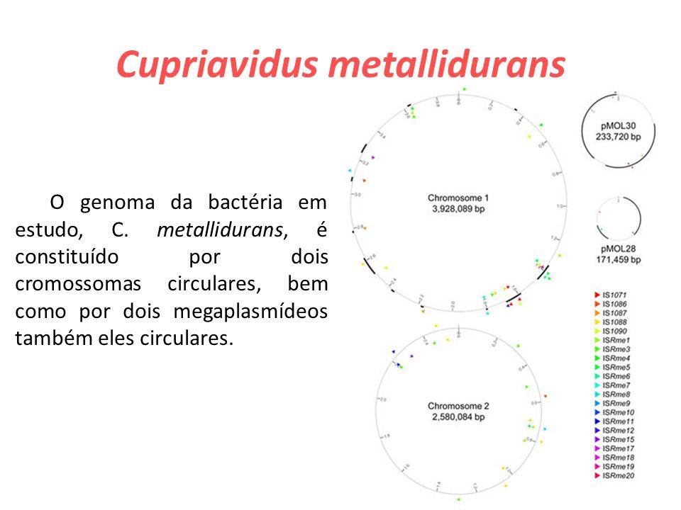 Cupriavidus metallidurans O genoma da bactéria em estudo, C.
