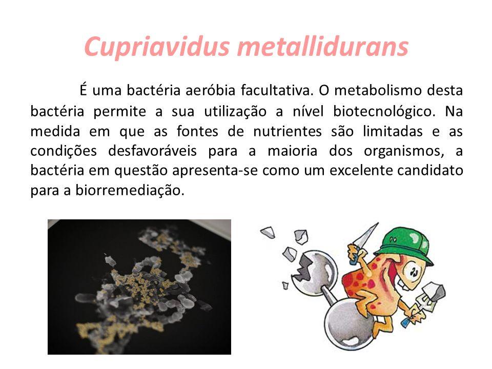 Cupriavidus metallidurans É uma bactéria aeróbia facultativa. O metabolismo desta bactéria permite a sua utilização a nível biotecnológico. Na medida