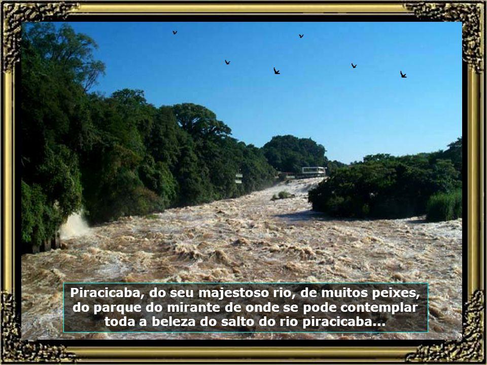 Piracicaba, do seu majestoso rio, de muitos peixes, do parque do mirante de onde se pode contemplar toda a beleza do salto do rio piracicaba...