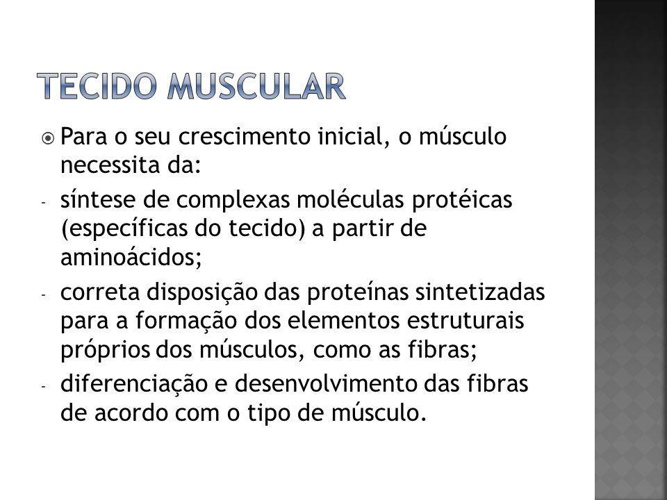  Para o seu crescimento inicial, o músculo necessita da: - síntese de complexas moléculas protéicas (específicas do tecido) a partir de aminoácidos;