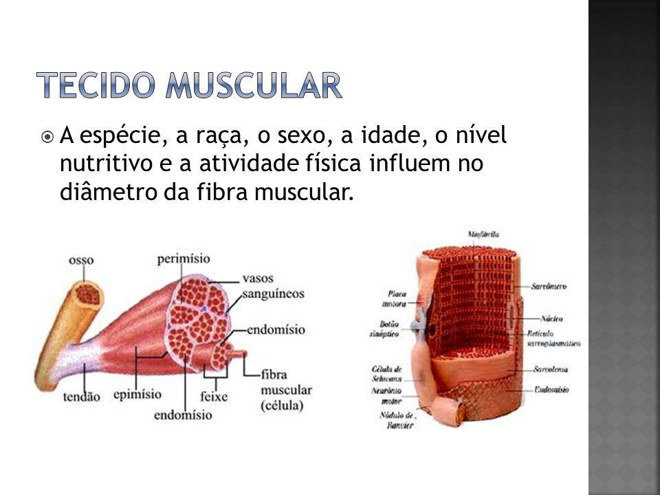  A espécie, a raça, o sexo, a idade, o nível nutritivo e a atividade física influem no diâmetro da fibra muscular.