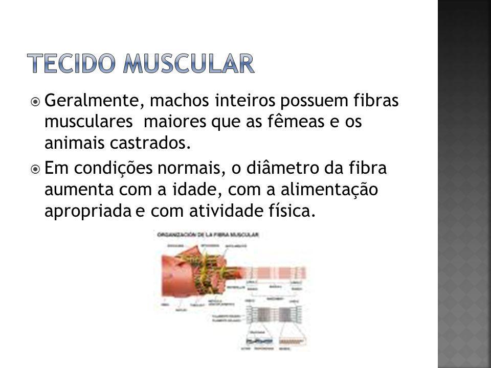  Geralmente, machos inteiros possuem fibras musculares maiores que as fêmeas e os animais castrados.  Em condições normais, o diâmetro da fibra aume