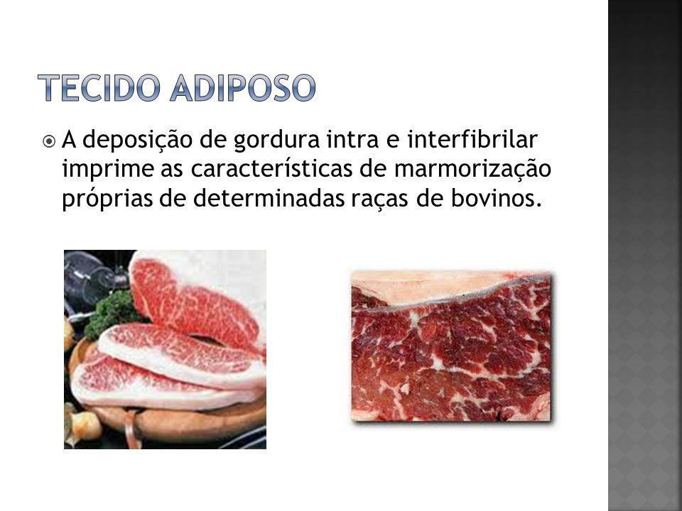  A deposição de gordura intra e interfibrilar imprime as características de marmorização próprias de determinadas raças de bovinos.