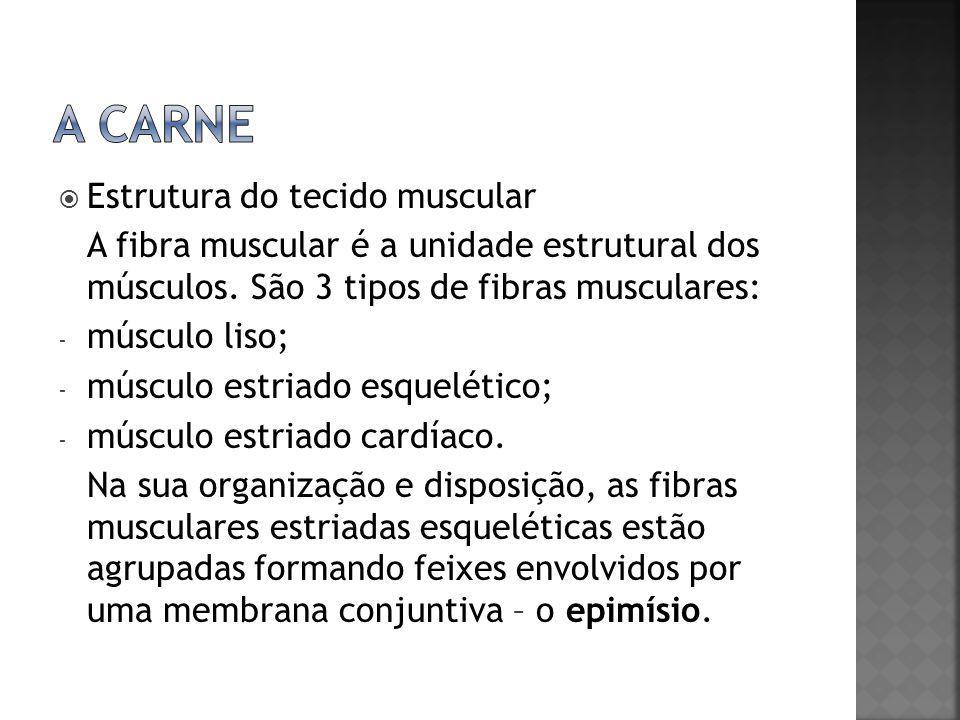  Estrutura do tecido muscular A fibra muscular é a unidade estrutural dos músculos. São 3 tipos de fibras musculares: - músculo liso; - músculo estri