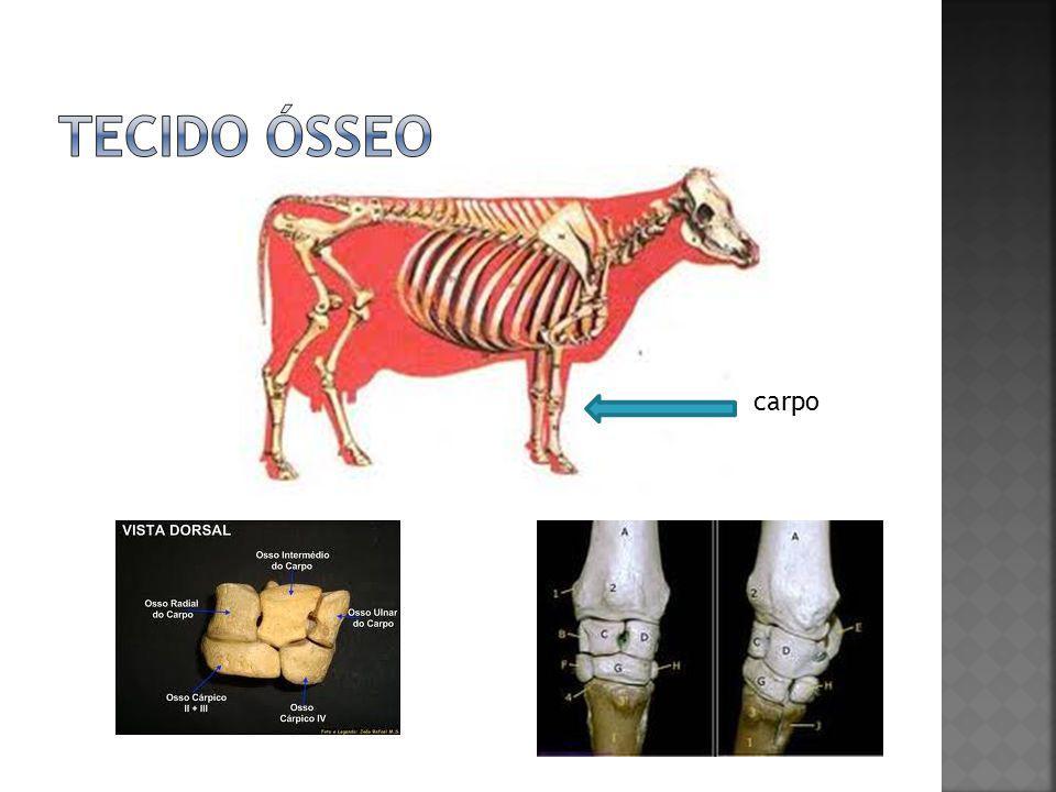 Vértebras sacrais Vértebras lombares Vértebras torácicas Ossificação (maturidade)