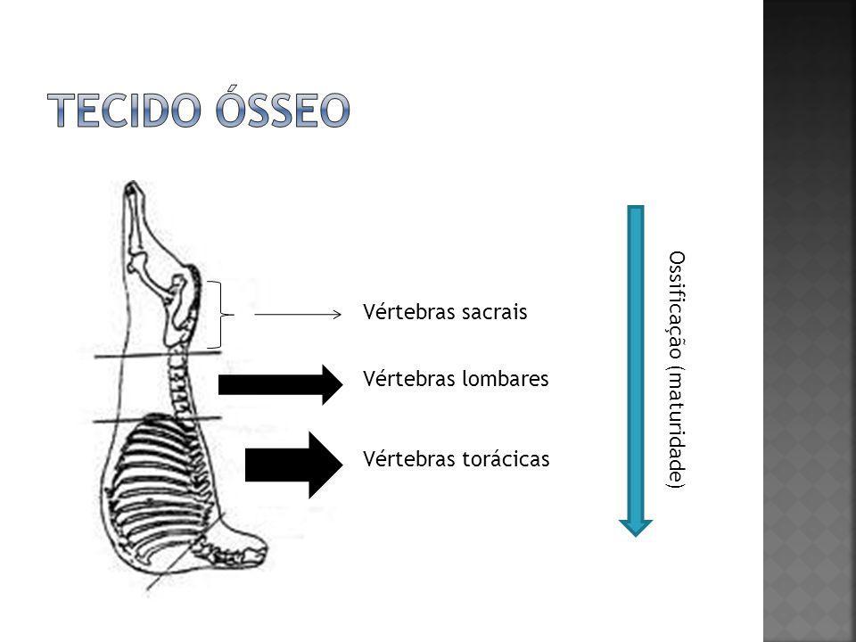 Existem prioridades fisiológicas em termos de formação dos diversos tecidos, obedecendo à seguinte ordem: - 1º tecido nervoso; - 2º esqueleto; - 3º músculos; - 4º gordura.