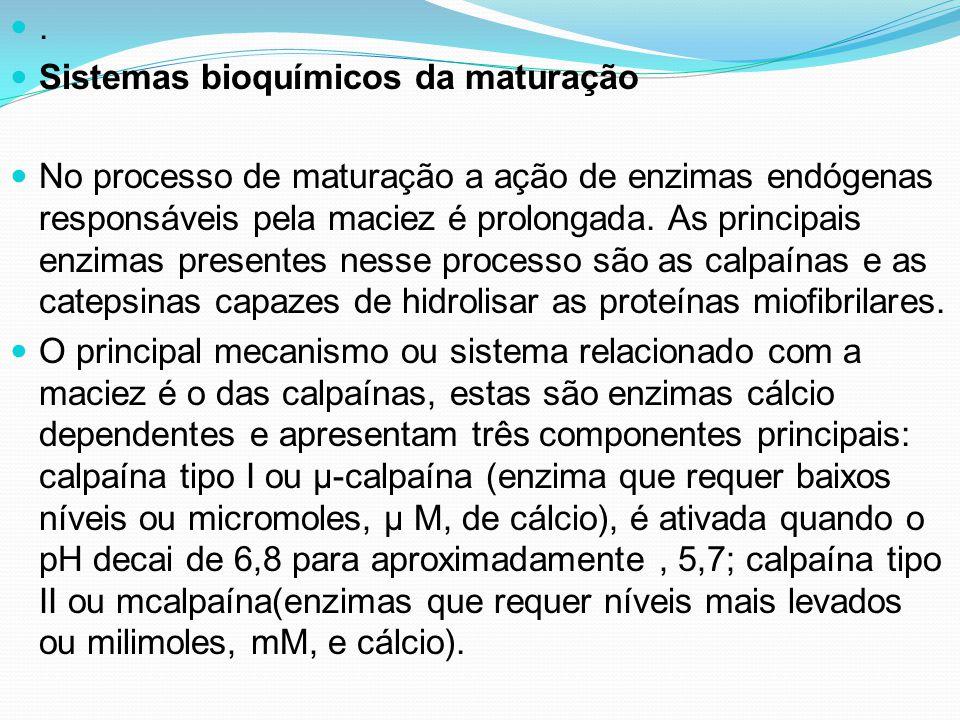 . Sistemas bioquímicos da maturação No processo de maturação a ação de enzimas endógenas responsáveis pela maciez é prolongada. As principais enzimas