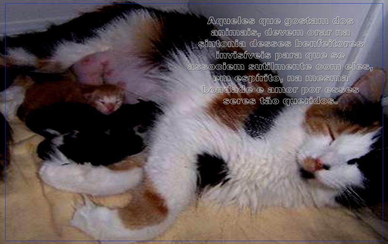 V I S I T E www.abcanimal.org.br www.floraisecia.com.br www.greepet.vet.br www.territorioselvagem.org.br www.petfeliz.com.br www.direitoanimal.org www.jornal3milenio.com.br www.apascs.org.br http://danielcaixao.multiply.com http://afamaran.zip.net http://ubbibr.fotolog.com/por_toda_vida http://poramoraosanimais.blog.terra.com.br www.redetv.com.br/lateshow www.aila.org.br www.institutoninarosa.org.br www.gatoverde.com.br www.clubedaspulgas.com.br www.vegetarianismo.com.br www.falabicho.org.br www.svb.org.br www.suipa.org.br www.projetomucky.com.br www.ranchodosgnomos.org.br www.arcabrasil.org.br www.pea.org.br www.sosfauna.org www.renctas.org.br www.apasfa.org http://portugallusofono.com http://www.vertentes.com.br/focinhocarente www.uipa.org.br www.institutoanael.org.br www.clubedototo.com.br www.oitovidas.org.br www.sopeq.com.br www.veda-bolivia.org www.quatropatas.org.br www.viafanzine.jor.br www.gaepoa.org