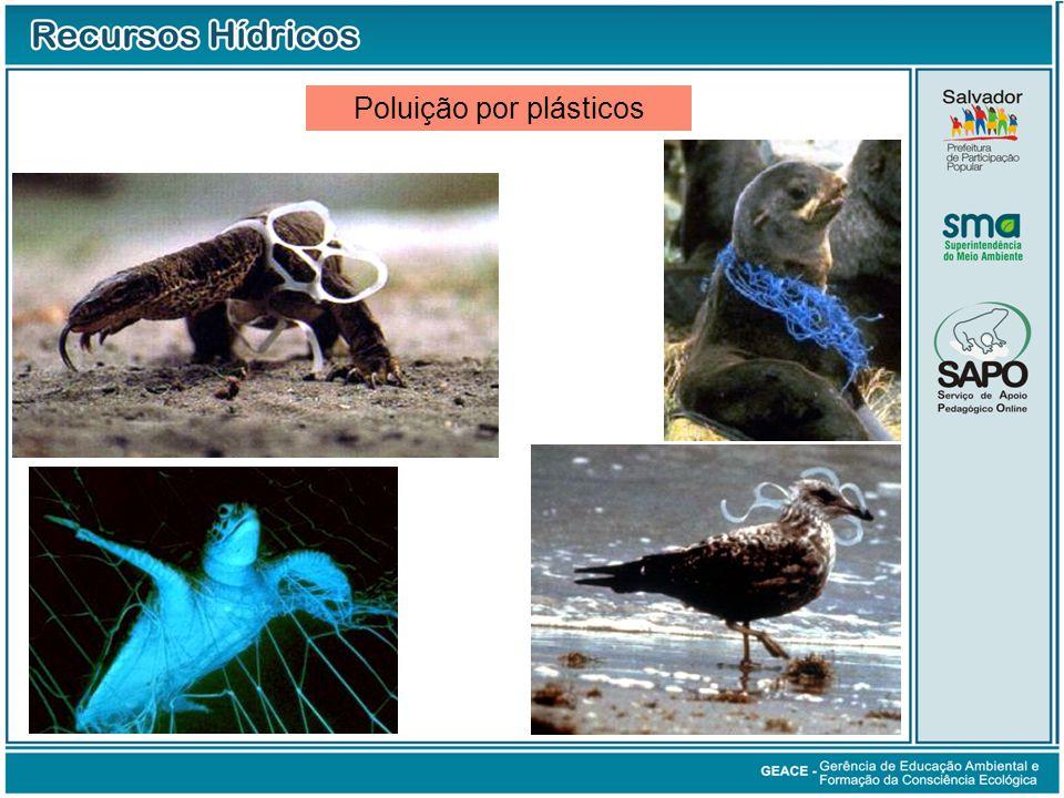 Poluição por plásticos Poluição por Plásticos