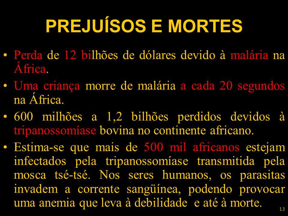 13 PREJUÍSOS E MORTES Perda de 12 bilhões de dólares devido à malária na África. Uma criança morre de malária a cada 20 segundos na África. 600 milhõe
