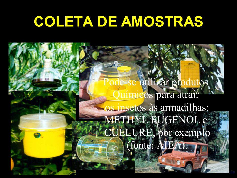 16 COLETA DE AMOSTRAS Pode-se utilizar produtos Químicos para atrair os insetos às armadilhas: METHYL EUGENOL e CUELURE, por exemplo (fonte: AIEA).