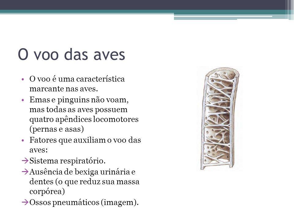 Revestimento do Corpo Coberto basicamente por penas que se desenvolvem a partir da pele.