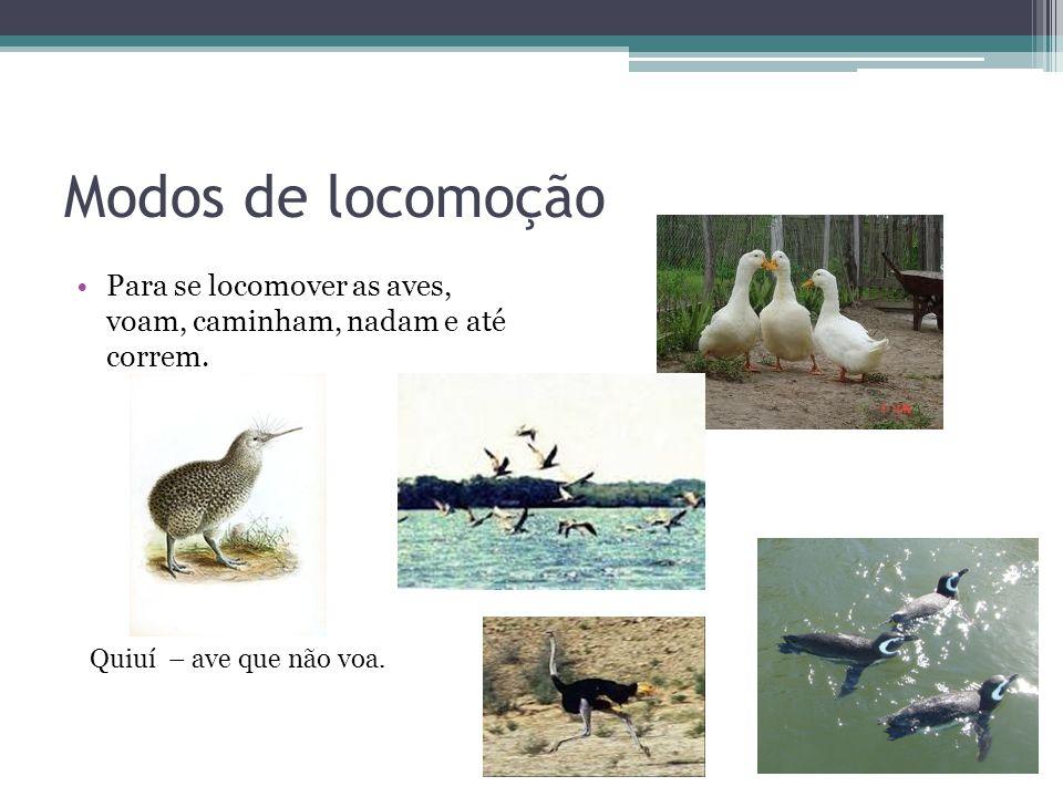 Modos de locomoção Para se locomover as aves, voam, caminham, nadam e até correm. Quiuí – ave que não voa.