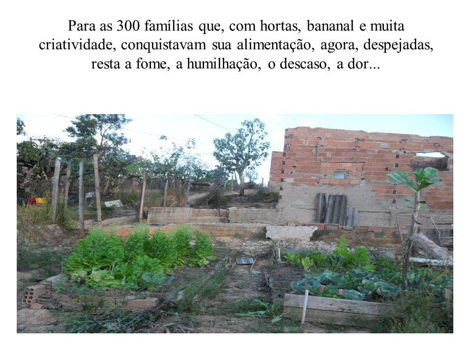 Para as 300 famílias que, com hortas, bananal e muita criatividade, conquistavam sua alimentação, agora, despejadas, resta a fome, a humilhação, o descaso, a dor...