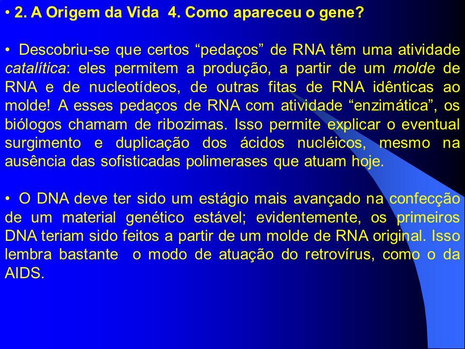 """2. A Origem da Vida 4. Como apareceu o gene? Descobriu-se que certos """"pedaços"""" de RNA têm uma atividade catalítica: eles permitem a produção, a partir"""