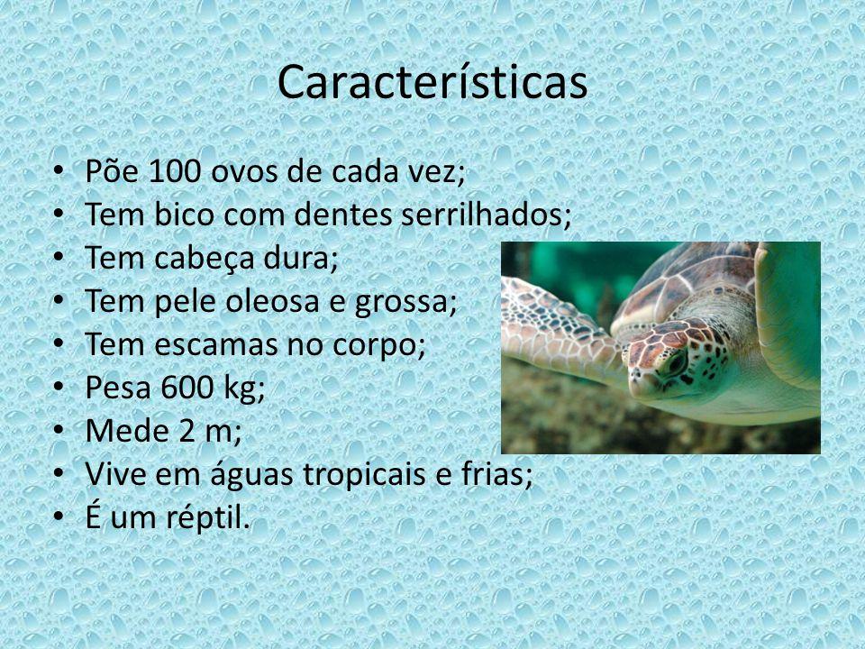 Características Põe 100 ovos de cada vez; Tem bico com dentes serrilhados; Tem cabeça dura; Tem pele oleosa e grossa; Tem escamas no corpo; Pesa 600 k