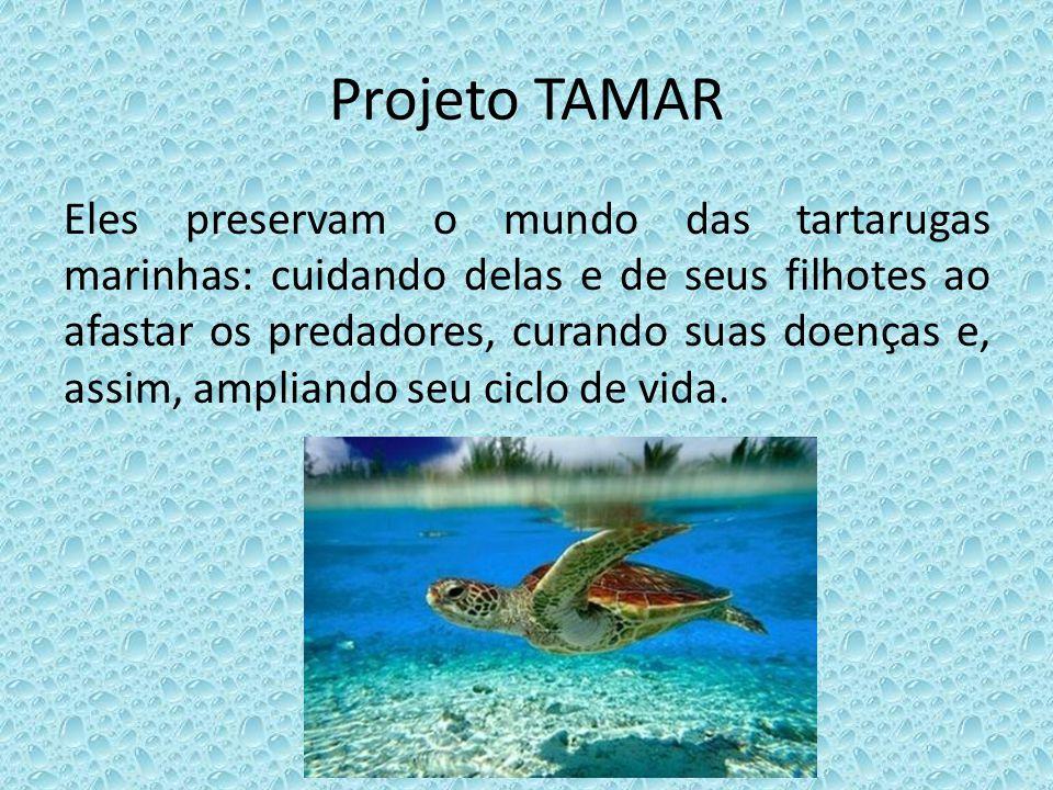 Projeto TAMAR Eles preservam o mundo das tartarugas marinhas: cuidando delas e de seus filhotes ao afastar os predadores, curando suas doenças e, assi